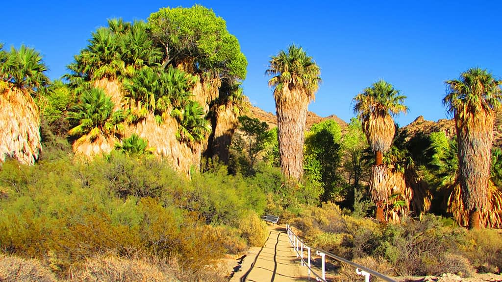 Big Morongo Canyon Preserve hiking trail