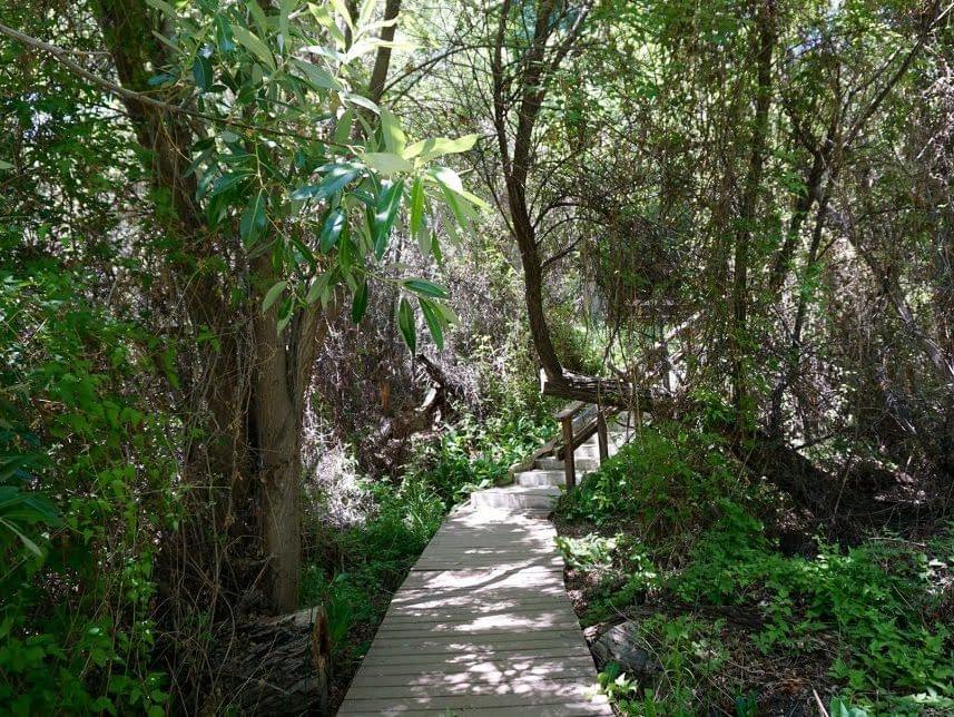 Big Morongo Canyon Preserve hiking trail in Desert Hot Springs